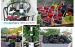 Отзыв о Напиток винный Vino Zupa Kupina Blackberry, Сербские мотивы или как создать ежевичное настроение с легкой хмельной вуалью