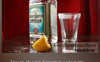 Из чего делается текила: как и с чем ее пить