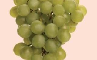 Совиньон блан (Sauvignon Blanc)
