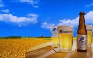 Бельгийское пиво Хугарден: описание, отзывы