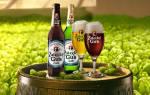 Пиво Жатецкий гусь: история, виды и короткие обзоры