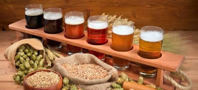 Пивоварение в домашних условиях для начинающих: этапы приготовления пива и простые рецепты