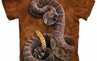 Футболка The Mountain с рисунком Rattlesnake (гремучая змея)