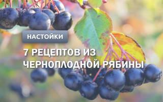 Настойка из черноплодной рябины: 7 рецептов в домашних условиях