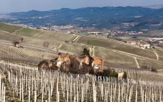 Вино Barolo из Пьемонта