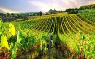 Кипрское вино – список лучших винных марок на Кипре