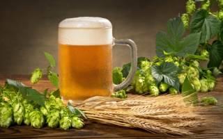 Пшеничное пиво, его виды