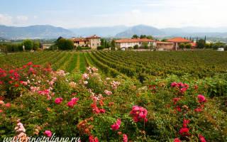 Franciacorta DOCG (игристые вина, спуманте, spumante)